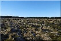 NS5013 : Clear fell somewhere east of Dalmellington by Richard Webb