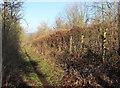 SU8182 : Bridleway near Hurley by Des Blenkinsopp