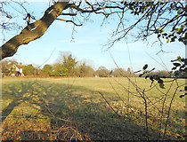 SU9567 : Field between the houses, Sunningdale by Des Blenkinsopp
