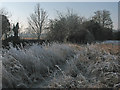 TL4152 : Haslingfield: a frosty spot by the Cam by John Sutton