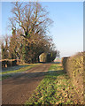 TL4252 : Near Rectory Farm by John Sutton
