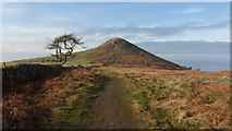 NZ5812 : The Cleveland Way on Roseberry Common by Anthony Foster