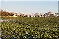 TR2742 : Field near St Radegund's Abbey by Ian Capper