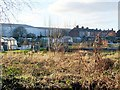 NY4155 : Adelaide Street allotments, January 2008 by Rose and Trev Clough