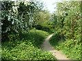 TQ5383 : Path, Berwick Wood by Robin Webster