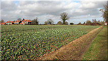 TG3204 : Oilseed rape crop beside the footpath to New Inn Hill by Evelyn Simak