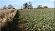TG3204 : Footpath skirting oilseed rape crop field by Evelyn Simak