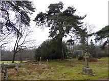 TQ0241 : St Andrew, Grafham: churchyard (c) by Basher Eyre