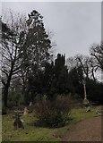 TQ0241 : St Andrew, Grafham: churchyard (g) by Basher Eyre