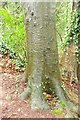 SX9065 : Tree trunk, Chapel Hill Pleasure Grounds by Derek Harper