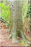 SX9065 : Tree trunk, Chapel Hill Pleasure Grounds by Derek Harper