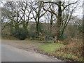 SY2197 : Parehayne Woods by Anthony Vosper