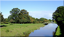 SJ6541 : Canal and pasture south of Audlem, Cheshire by Roger  Kidd