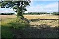 ST8066 : Wheat fields near Monkton Farleigh by Bill Boaden