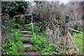 SY4791 : Footpath Steps near Bothenhampton by Nigel Mykura