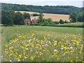 SP8404 : Buckmoorend - Dandelion Bloom by Colin Smith