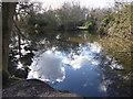 TQ4093 : Buxton's Pond in Knighton Wood by Marathon