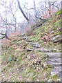 NZ0417 : Stone steps in the wood by Oliver Dixon