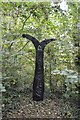 SX5452 : National Cycle Route Network Milepost by N Chadwick