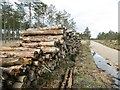 SY9190 : Wareham Forest, timber by Mike Faherty
