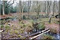 TQ0659 : Wet flush in birch woodland, Wisley Common by Simon Mortimer