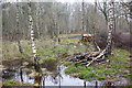 TQ0658 : Water-logged birch woodland, Wisley Common by Simon Mortimer