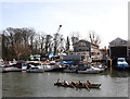 TQ1673 : Rowing past Eel Pie Island by Des Blenkinsopp