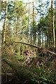 SX9280 : Fallen trees, Obelisk Plantation by Derek Harper