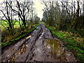 H5268 : A muddy lane with puddles, Tattykeeran by Kenneth  Allen