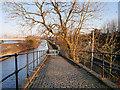 SJ8196 : Bridgewater Canal Towpath at Pomona by David Dixon