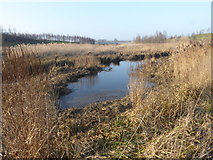 TQ3785 : Wetland alongside the River Lea by Marathon