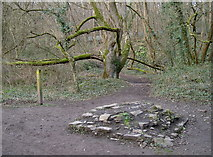 ST6470 : Junction at Bickley Wood by Neil Owen
