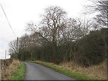 NT1686 : Wooded lane near Chapel by M J Richardson
