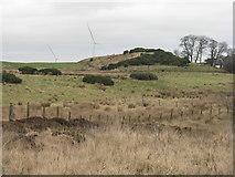 NT1890 : Rough pasture near Mossmorran by M J Richardson
