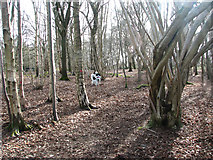 TG2202 : Dogs on Dunston Common by Evelyn Simak