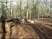 TG2202 : Path on Dunston Common by Evelyn Simak