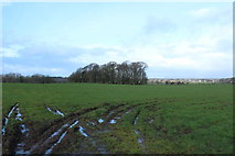NS3530 : Farmland near Loans by Billy McCrorie