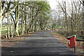NS3430 : Road in Darley Plantation by Billy McCrorie