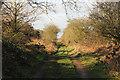 TF7529 : Peddars Way by Richard Croft