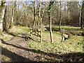 TQ3022 : Footpath proceeds to bridge over stream by Shazz