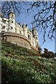 NC8500 : Bank of Snowdrops at Dunrobin Castle, Sutherland by Andrew Tryon