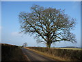 NY6421 : Tree on the road called South End by Christine Johnstone