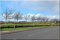NS3428 : Trees at the Aerospace Park, Monkton by Billy McCrorie