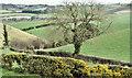 J4271 : Drumlins, Ballymagliff, Comber/Dundonald (March 2017) by Albert Bridge