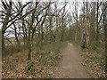 SE3431 : Bridleway through Bell Wood by Stephen Craven