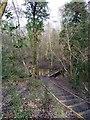TQ7109 : Boardwalk in Highwoods by PAUL FARMER