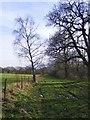 SJ8000 : Bridleway view  by Gordon Griffiths
