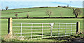 J4471 : Field gates, Ballyrainey, Dundonald/Comber (March 2017) by Albert Bridge