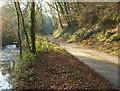 SS5317 : Lane by the Woolleigh Brook by Derek Harper