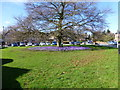 SJ3277 : Spring colour in Willaston by Raymond Knapman